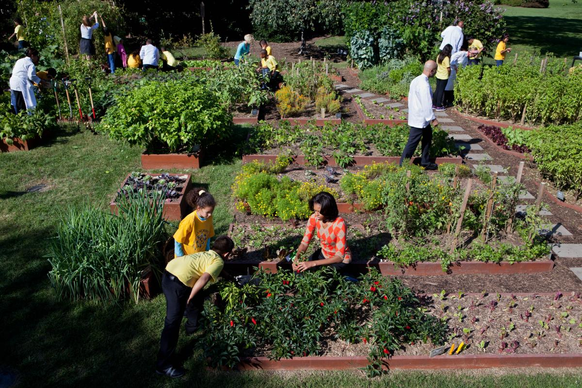 Then First Lady Michelle Obama and White House Chefs join children from Bancroft and Tubman Elementary Schools to harvest vegetables during the third annual White House kitchen garden fall harvest Oct. 5, 2011.