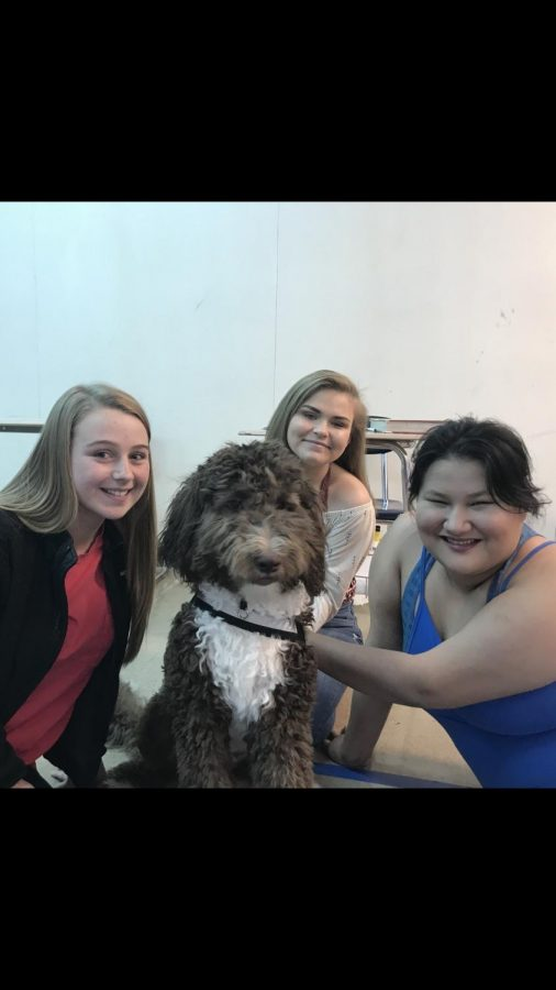 Renee%2C+the+Newfoundland+poodle+who+is+training+to+become+a+therapy+dog%2C+pictured+with+Boone+students+Mackenzie+Wolfe%2C+Tory+Ryder+and+Kendall+Rottinghaus.