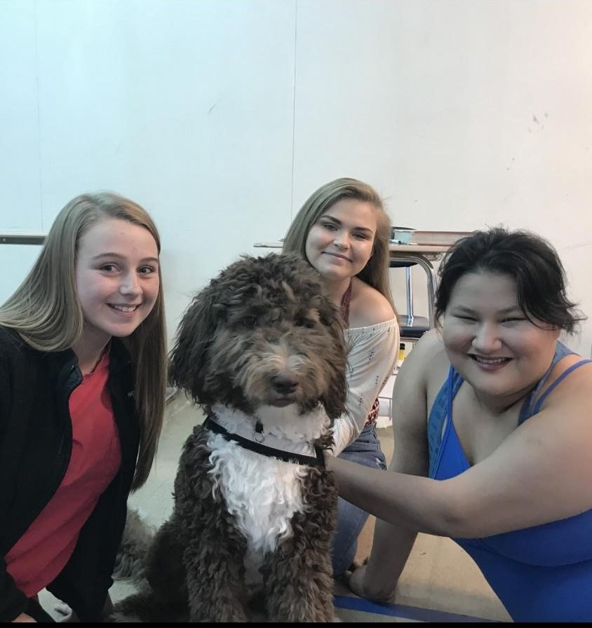 Renee, the Newfoundland poodle who is training to become a therapy dog, pictured with Boone students Mackenzie Wolfe, Tory Ryder and Kendall Rottinghaus.